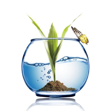 Butterfly on the fish bowl with plant growing inside photo
