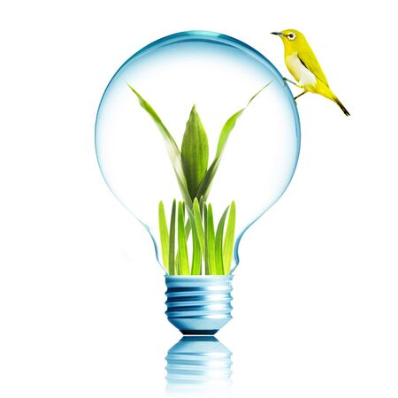 environmental protection: Yellow bird on light bulb with green leaf and grass inside Stock Photo