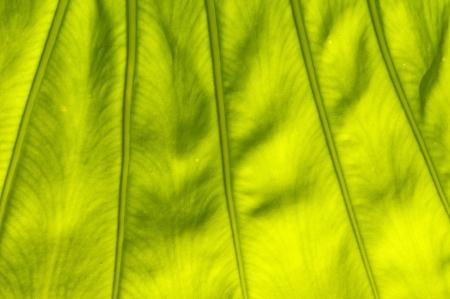 Green leaf texture  Close up shot photo