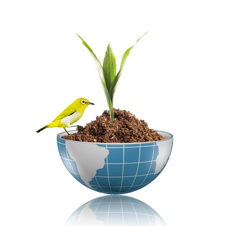 Yellow bird on globe with plant growing on dirt Stock Photo - 17205899