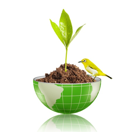 Yellow bird on globe with plant growing on dirt Stock Photo - 17205906