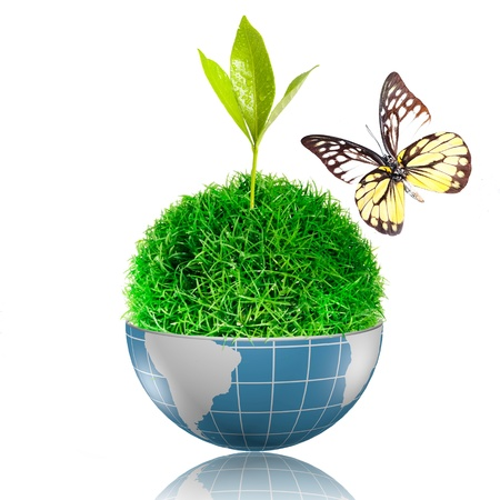 Butterfly flying to the ball of grass inside the globe with plant growing Stock Photo - 17205900