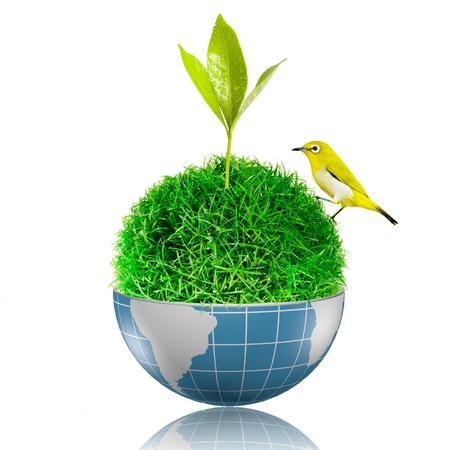 Bird on the ball of grass inside the globe with plant growing 版權商用圖片