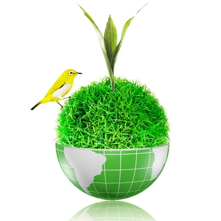 Bird on the ball of grass inside the globe with plant growing Stock Photo - 17205897