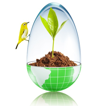 Bird on the ball on globe with plant growing inside with glass cover Stock Photo - 17205902