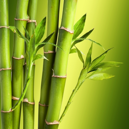 Fresh Bamboo on yellow and green background photo