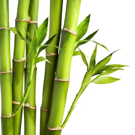 japones bambu: Bamb? en el fondo blanco Foto de archivo