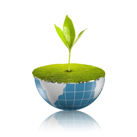 Plant growing on globe Stock Photo - 18091476