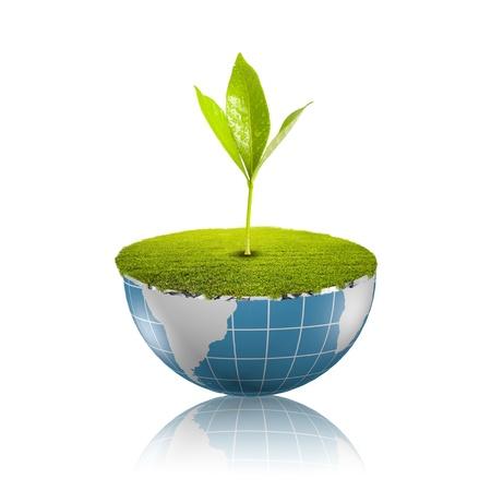 Plant growing on globe Stock Photo - 18091476