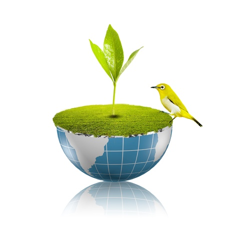 Bird on globe with grass growing Stock Photo - 18091478