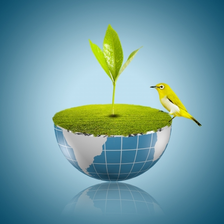 Bird on globe with grass growing Stock Photo - 18091486