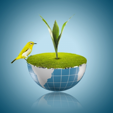 Bird on globe with grass growing Stock Photo - 18091484