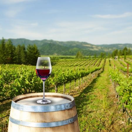 Verre de vin rouge avec la scène de vignoble dans le fond Banque d'images