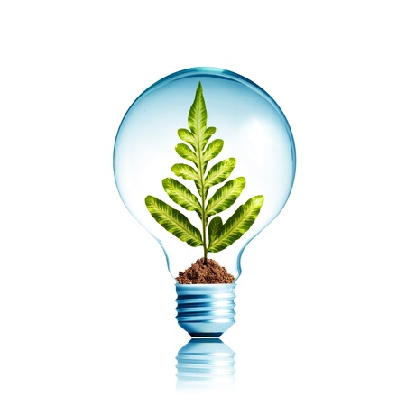 green light bulb: Plant growing inside light bulb with soil  Concept for ecology
