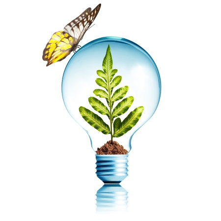 Plant growing inside light bulb with soil and butterfly  Concept for ecology photo