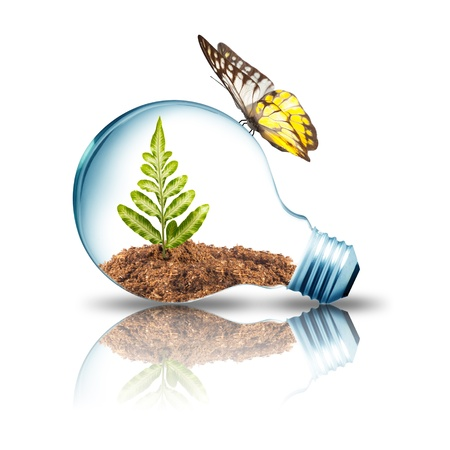 yellow bulb: Plant growing inside light bulb with dirt and butterfly