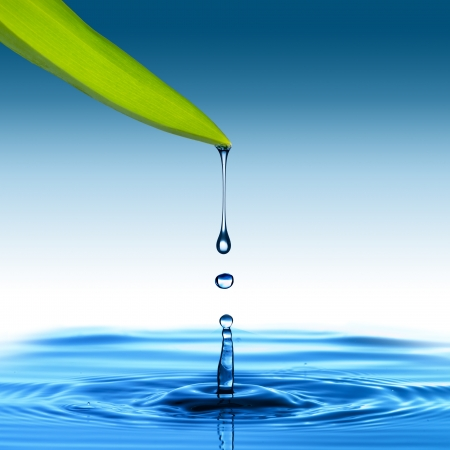 Water drop from green leaf on blue background