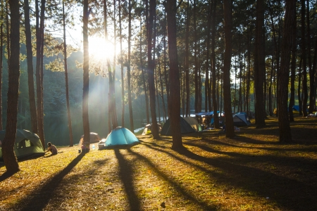 roughing: Camping tent with fog and trees at sunrise