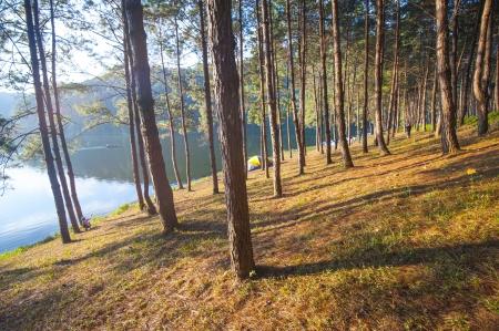 roughing: Trees at lake