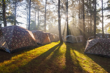 settled: Camping tent with fog and trees at sunrise