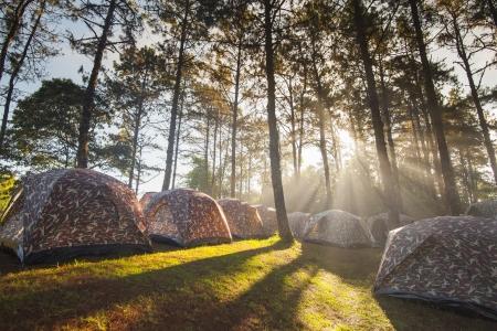 霧と日の出で木を備えたテント キャンプ 写真素材