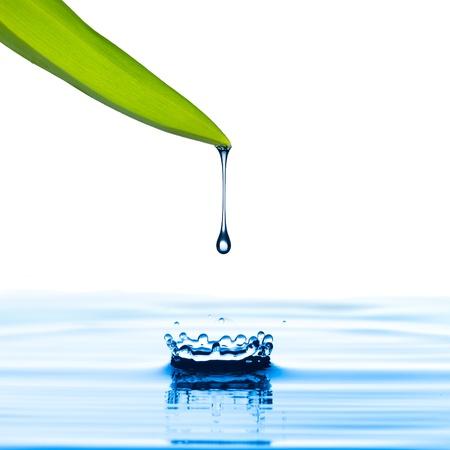 Water drop van groen blad op witte achtergrond