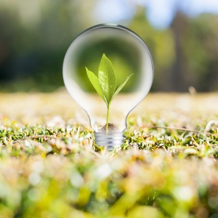 Light bulb on green grass Stock Photo