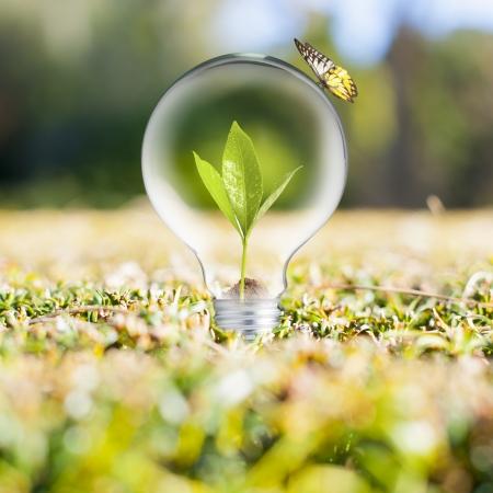 緑の草に電球 写真素材