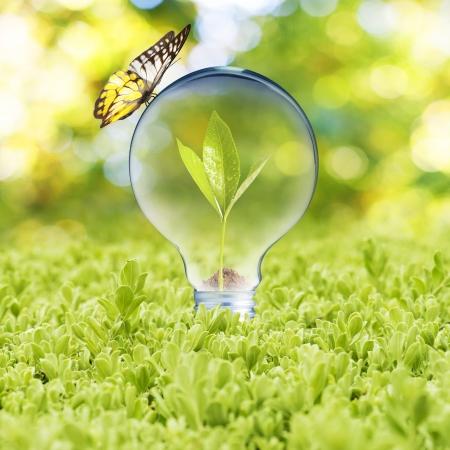 Ampoule sur l'herbe verte et le concept de papillon de la technologie Eco