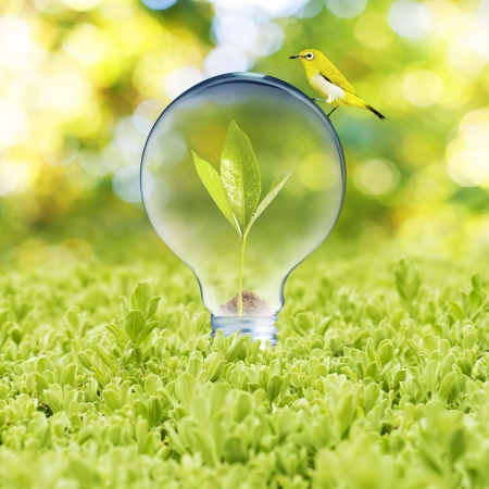Light bulb on green grass and bird  Concept of Eco technology photo