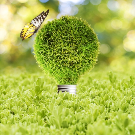 Grass Light bulb on green grass and butterfly  Concept of Eco technology photo