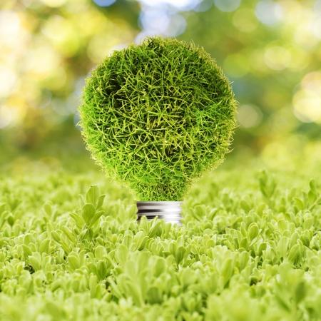 energia renovable: Grass Bombilla en concepto de hierba verde de la tecnolog�a Eco Foto de archivo