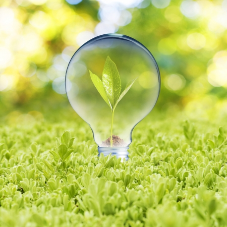 growing inside: Light bulb with plant growing inside on green grass