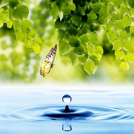 gota: Mariposa con la hoja verde y el agua caída Foto de archivo