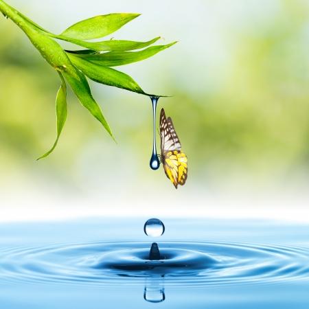 puro: Mariposa con la hoja verde y el agua caída Foto de archivo