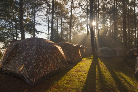 roughing: Illuminated Camping tents from sunlight with silhouette trees in outdoor