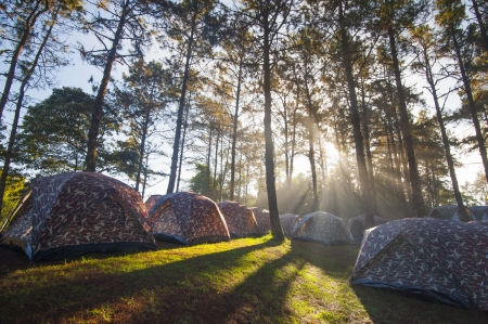 settled: Illuminated Camping tents from sunlight with silhouette trees in outdoor