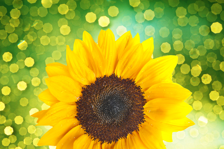 Sunflower with bokeh light background photo