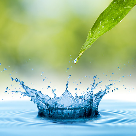 Water Drop from green leaf photo
