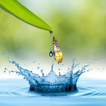 Water drop from green leaf to form water splash