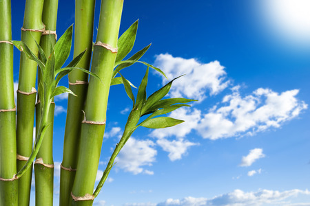 Bamboo on blue sky photo
