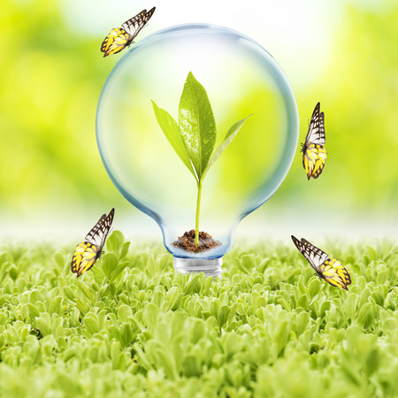 natural resource: Light Bulb with plant inside and butterfly