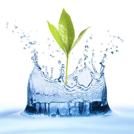 Leaf with water Splash photo