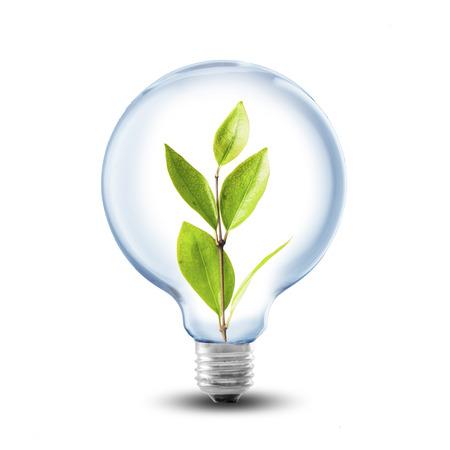 Lightbulb with plant inside photo
