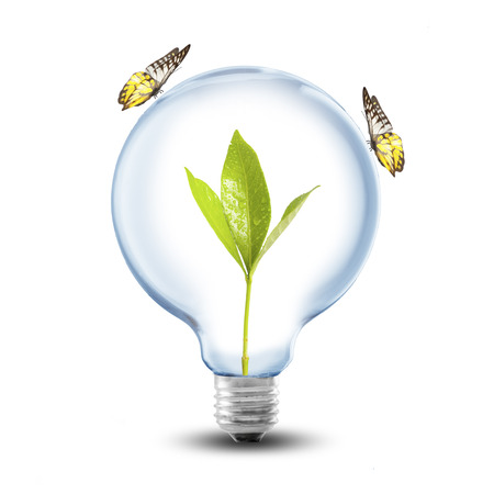 Lightbulb with plant inside and butterfly photo