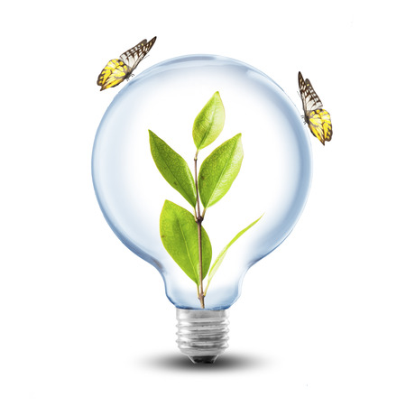 green power: Lightbulb with plant inside and butterfly