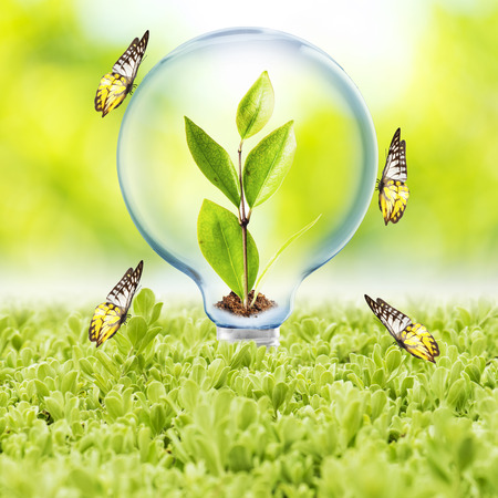 Light Bulb With Plant Inside and Butterfly photo