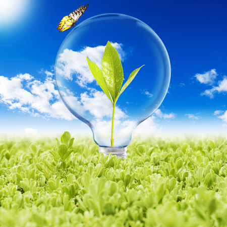 Light Bulb With Plant Inside and Butterfly Standard-Bild