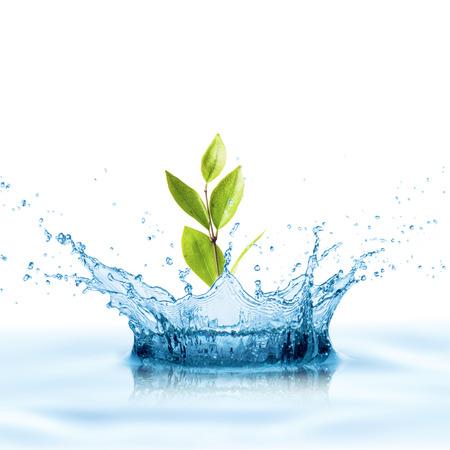 Green Leaf with Water Splash