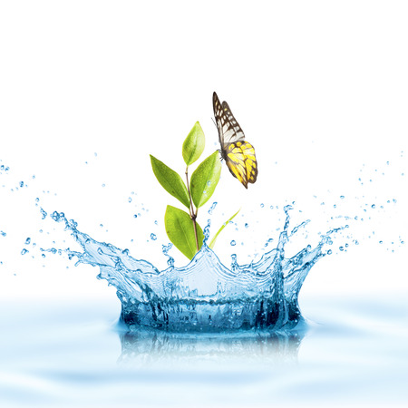 ripple effect: Green Leaf with Water Splash and Butterfly